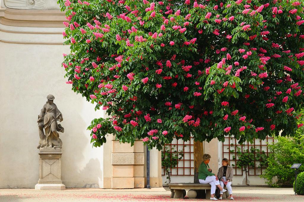 Вальдштейнский сад, Прага