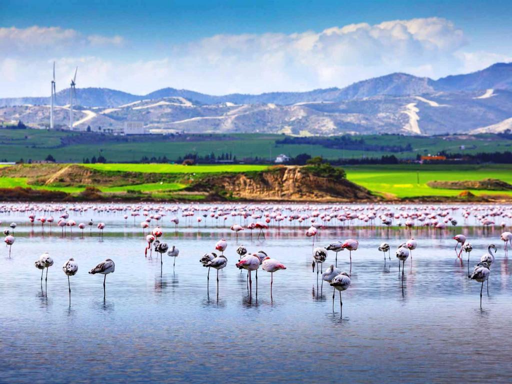 Озеро с фламинго в Ларнаке