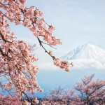 Праздник цветения сакуры в Японии - О-Ханами
