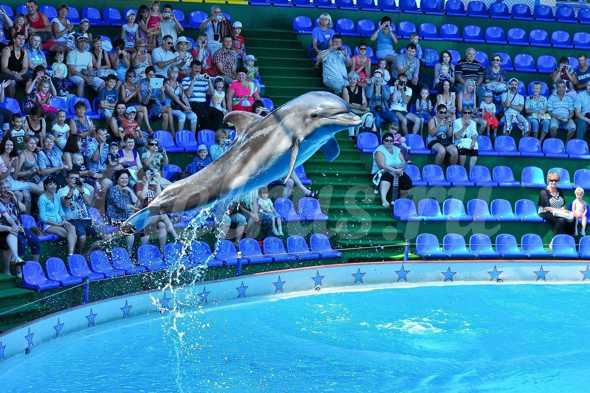 Дельфинарий Акватория в Адлере