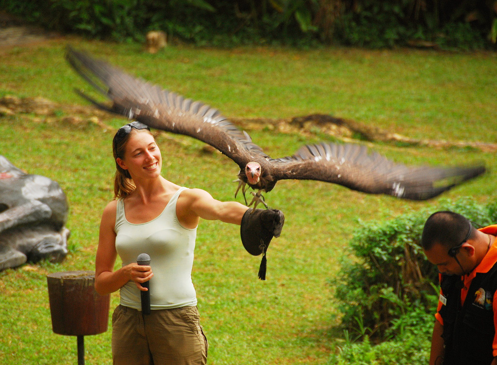 Птичий парк в Сингапуре