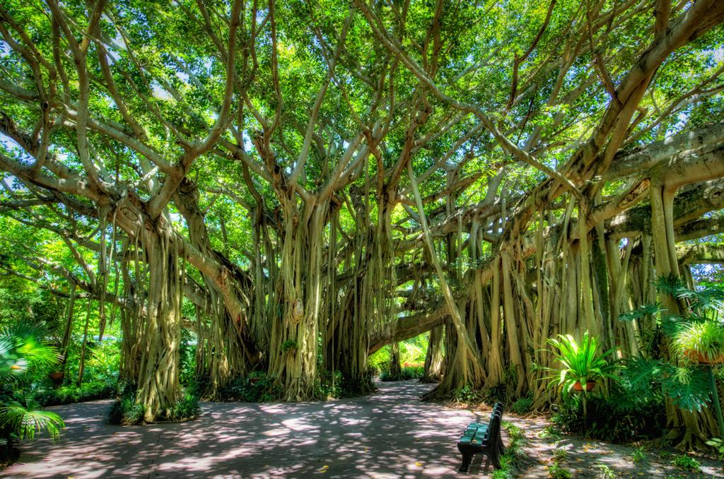 Ботанический сад Cypress Gardens, Орландо