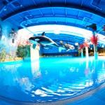 Аквапарк Dream Island в ТРЦ Дрим Таун, Киев