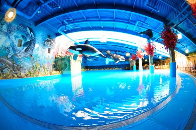 Развлечения в аквапарке Dream Island в Киеве