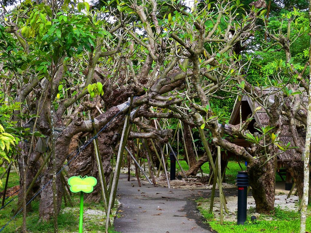 Детский парк Дж. Балласа в Сингапуре