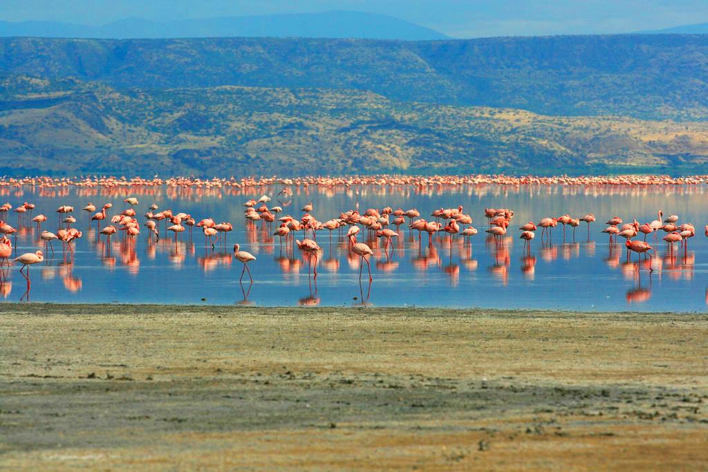 Фламинго, озеро Натрон