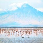 Озеро Натрон в Танзании и его губительная красота