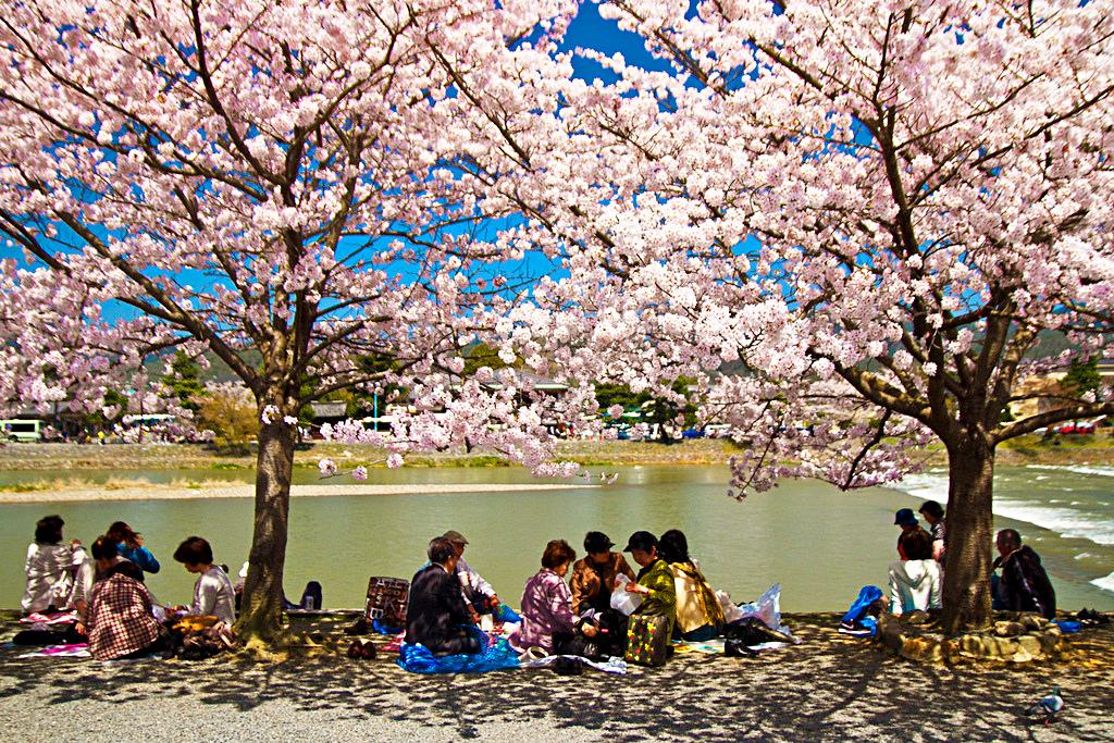 Пикник под цветущими сакурами
