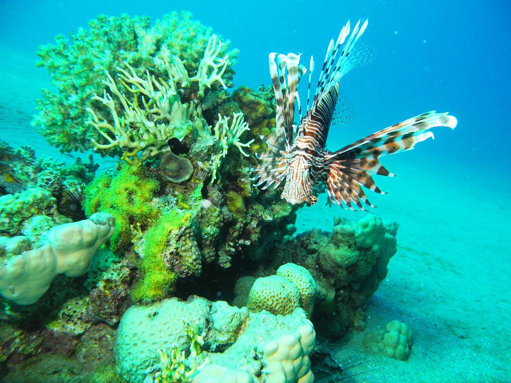 Коралловый риф, Красное море, Эйлат