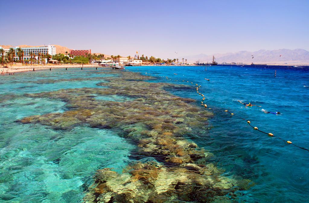 Коралловый риф в Эйлате