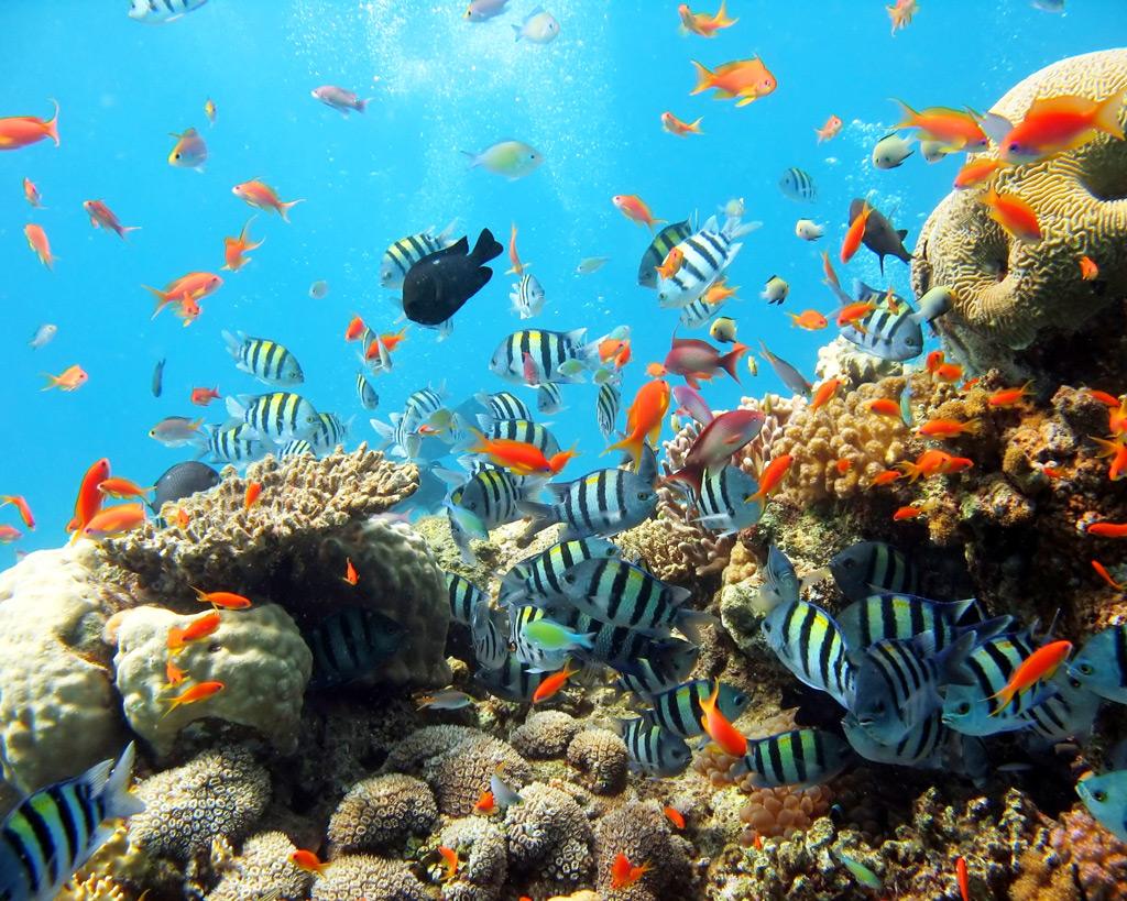 Красное море, коралловый риф, Эйлат