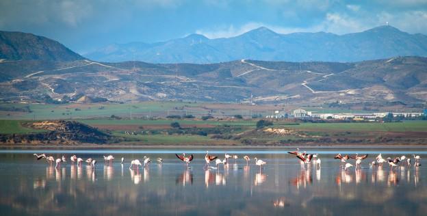 Озеро Алики, Ларнака, Кипр