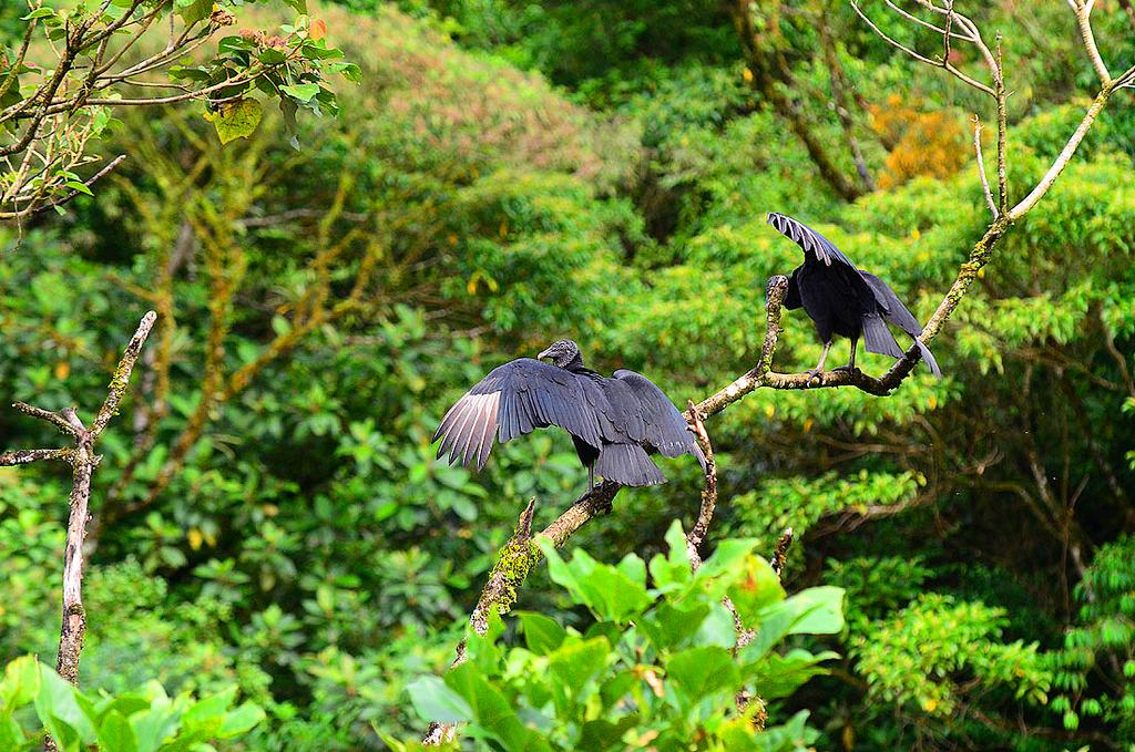 Парк «Тапанти», Коста-Рика