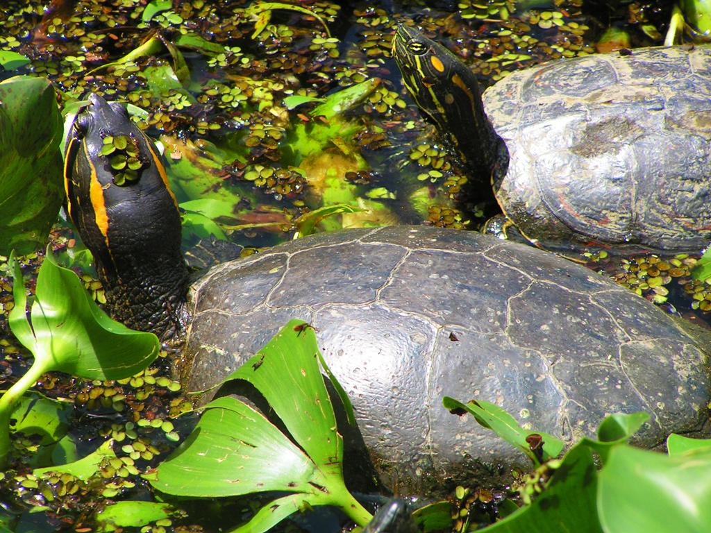 Парк INBio, Коста-Рика