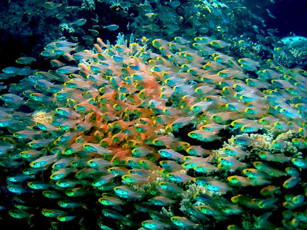 Природа кораллового рифа, Эйлат
