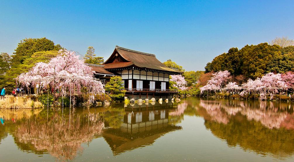 Цветение сакуры возле храма Хэйан, Киото, Япония