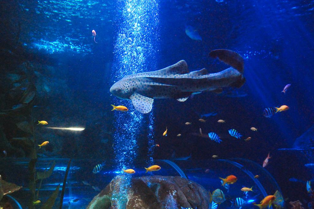 Подводный мир в океанариуме «Sea Life» в Хельсинки
