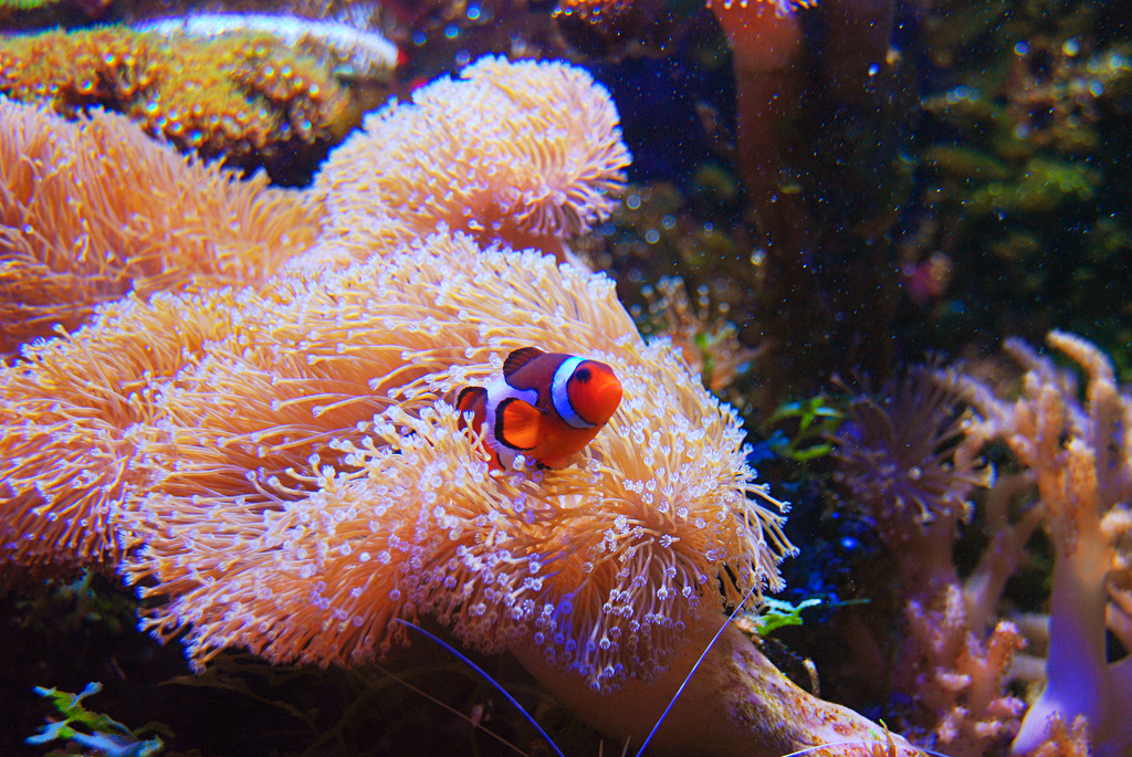 Подводный мир в океанариуме Sea Life в Хельсинки