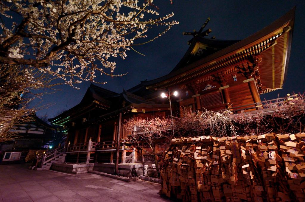 Фестиваль цветения слив Умэ Мацури в Бунке, Токио