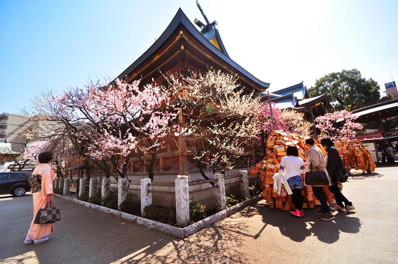 Фестиваль цветения сливы в храме Юшима Тенмангу
