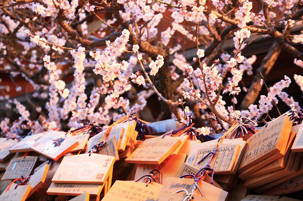 Фестиваль Уме Мацури в Японии