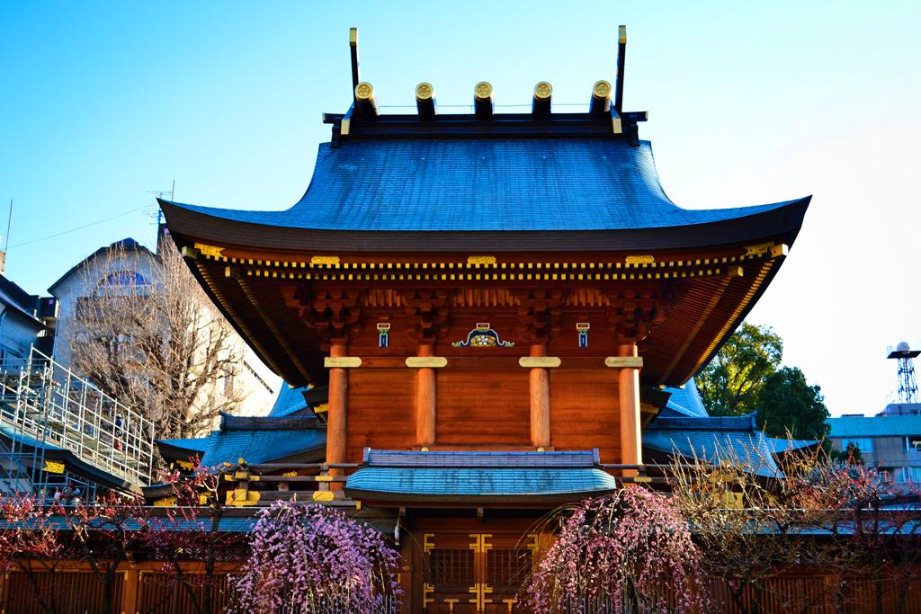 Храм Юшима Тенмангу - Фестиваль цветения сливы, Токио