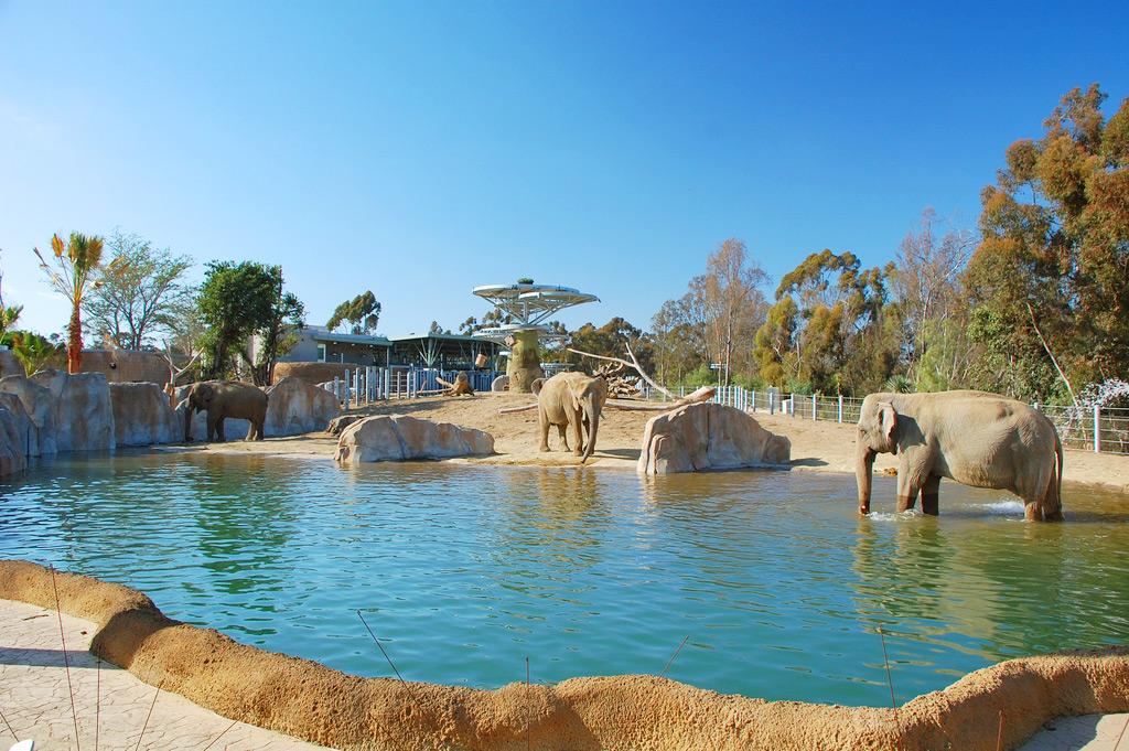Слоны в зоопарке Сан-Диего