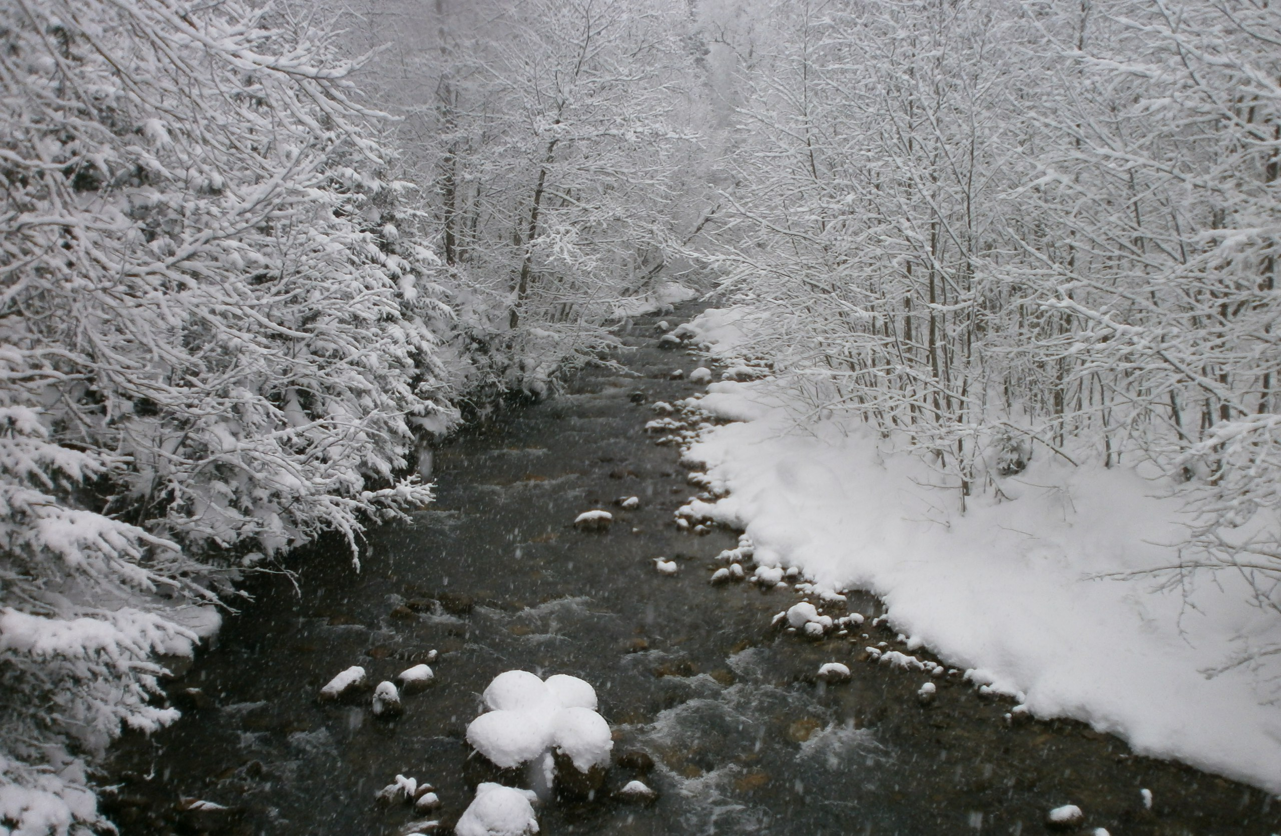Кавказский заповедник зимой