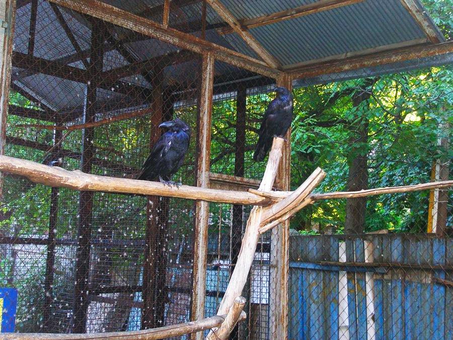 Двор с воронами