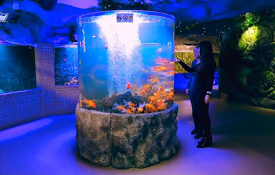 Океанариум Морская сказка в Киеве