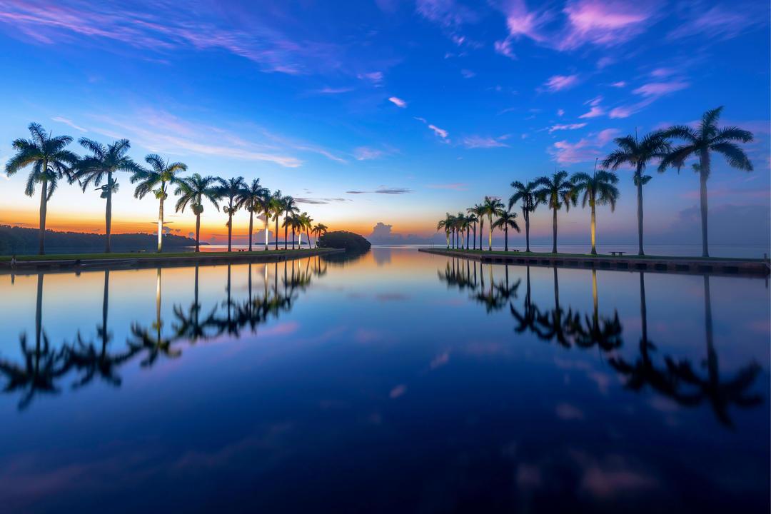 Пальмы на берегу залива