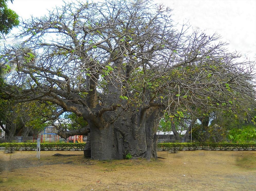 Королевский Парк Квин в Барбадосе