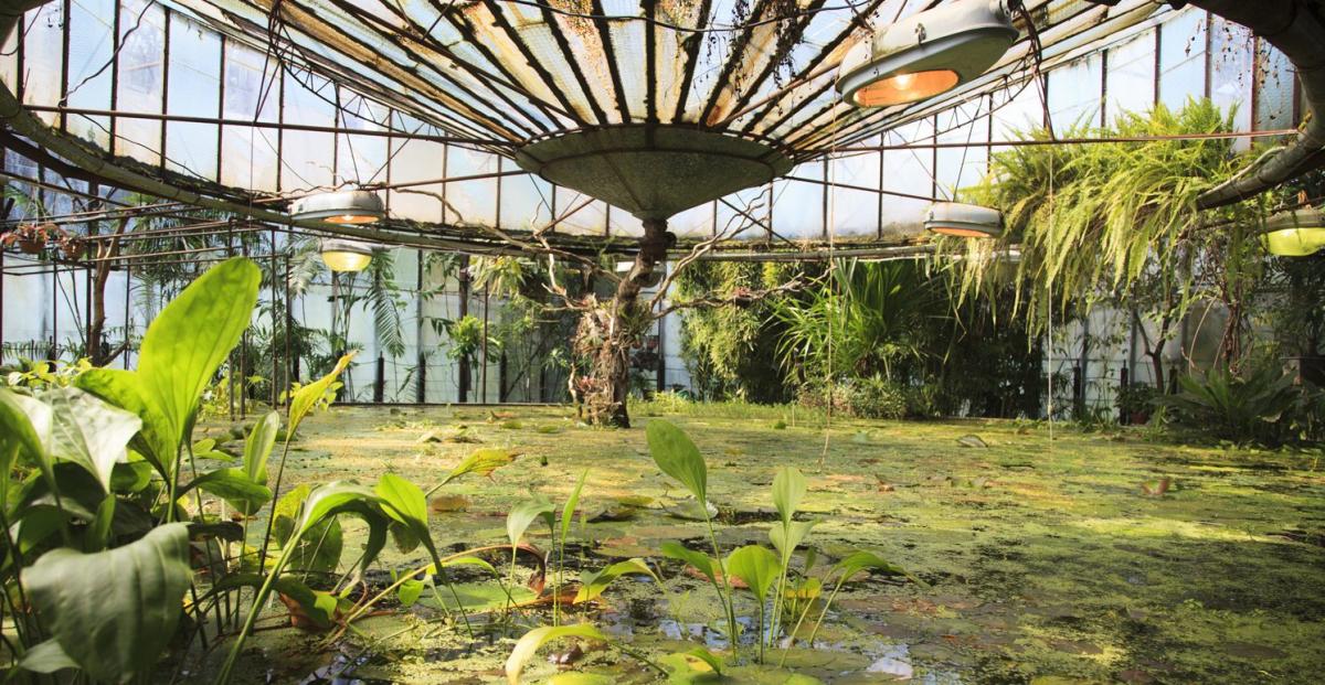 """Результат пошуку зображень за запитом """"ботанический сад киев зимой"""""""
