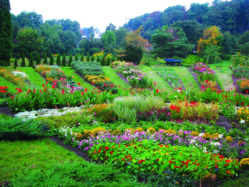 ботанический сад киев. фото
