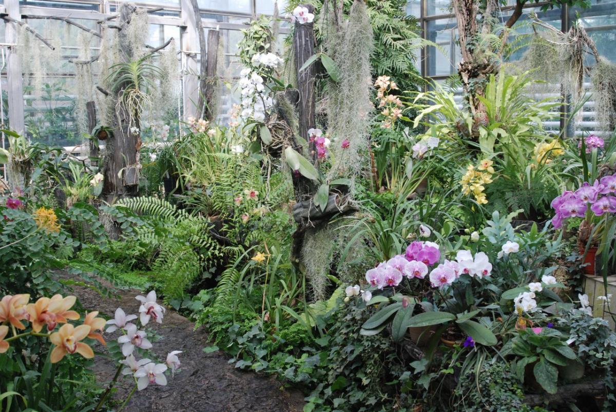 Hryshko National Botanical Garden in Kiev - ticket price, schedule