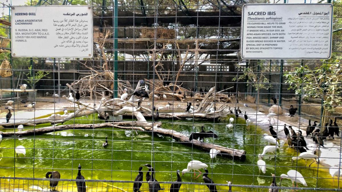 Зоопарк в дубай отзывы сардиния снять дом