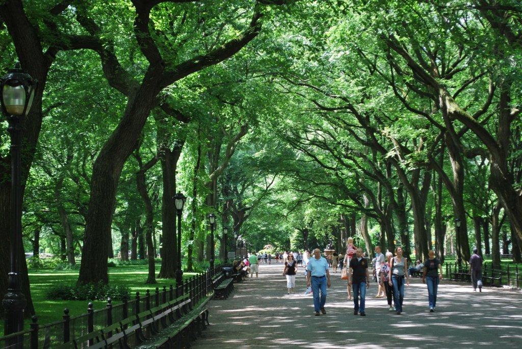 Алея Центрального парка