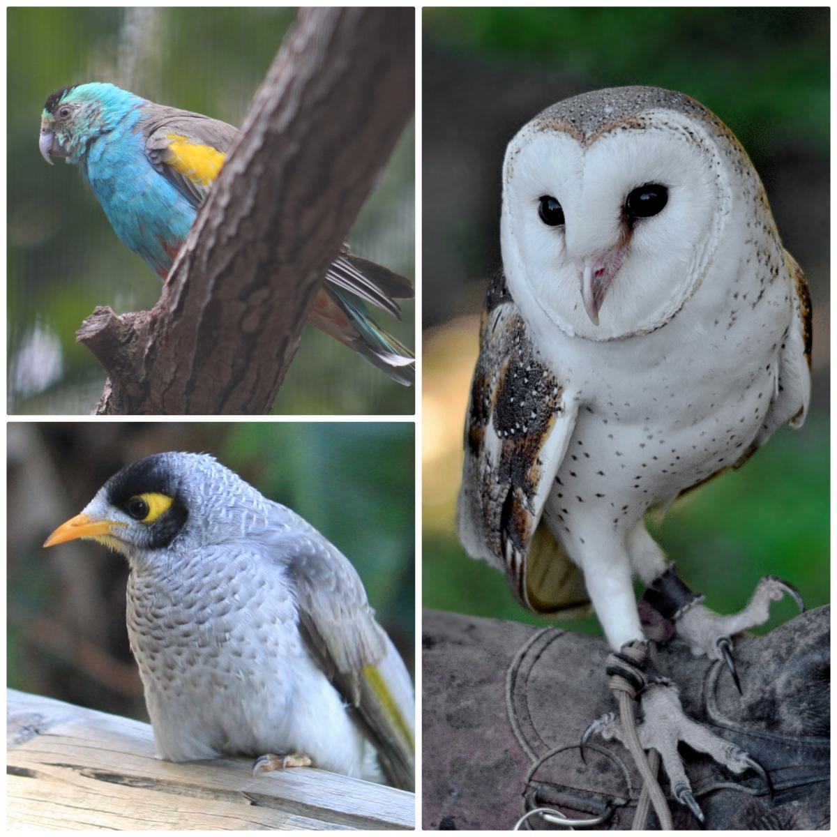 Лоун Пайн Коала_птицы