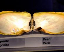 Музей жемчуга в Манаме