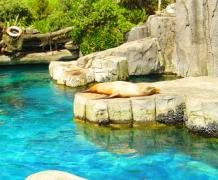 Оклендский зоопарк