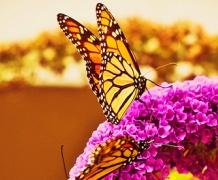 Сад и ферма бабочек