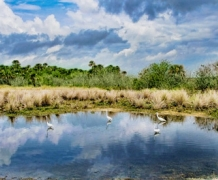 Национальный резерват живой природы Мерритт-Айленд