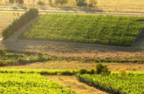 Виноградники Альто-де-Баллена