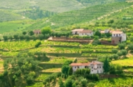 Винодельческий район Алту-Дору