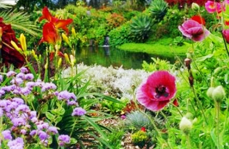 Ботанический сад Пакакуна