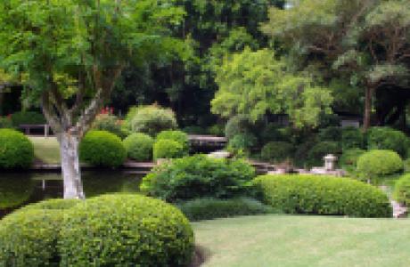 Брисбенский ботанический сад фото