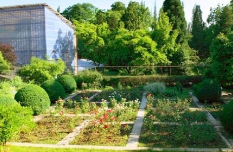 Ботанический сад в Ужгороде