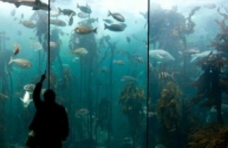 Аквариум двух океанов в Кейптауне
