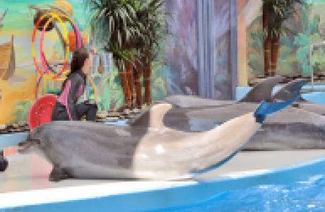 Дельфинарий Ривьера