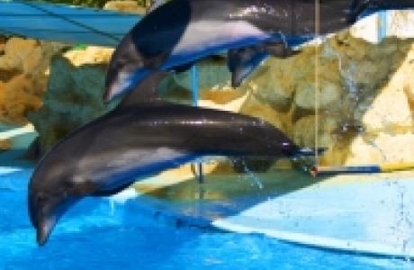 Дельфинарий в районе Hadaba